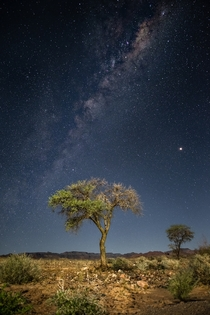 The Milky Way over a lonely tree in the Namib desert - Namibia
