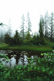 The misty wetlands of British Columbia  Intsa markcmcgovern