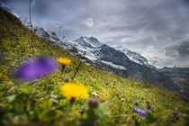 The Mnch in the Bernese Alps Grindelwald Switzerland