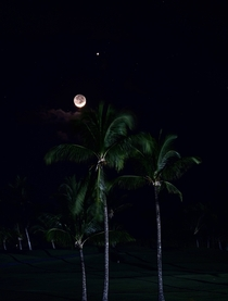 The Moon and Venus behind some coconut trees