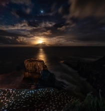 The Moon setting over a Gannet colony in New Zealand