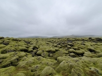 The moss layer formed on the rocks in Iceland as a result of the eruption of the Eyjafjallajkull volcano in  and the ash spread  - ig alperyesiltas