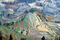 The Most Beautiful Rice Paddies in China