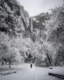 The most snow weve seen in  years -Yosemite Ranger