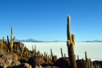 The most stunning contrasting and alien place I have had the privilege to visit Cactus Island in the Salar de Uyuni Bolivia