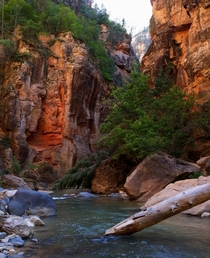 The natural unedited colors of nature The Narrows at Zion National Park UT