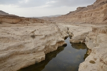 The Negev Desert Israel Stumbling upon this little creek in the desert wilderness was a refreshing surprise
