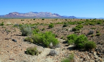 The Nevada Steppe