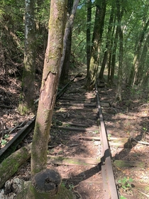 The old Birmingham Mineral Railroad reclaimed by the trees in Alabama