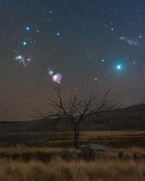 The Orion Nebula and a few other interesting night sky features over a Saskatchewan tree