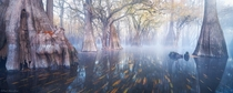 The otherworldly swamps of North Florida  Photo by Paul Marcellini xpost from runitedstatesofamerica