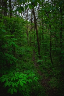 The Ozark Trail weaving through a lush bottomland forest near the Huzzah River Missouri  x