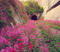 The Paris Inner City called the Little Belt Railway Abandoned since