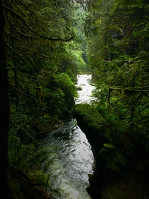 The peaceful Lynn Valley Creek flowing through the temperate rainforest- North Vancouver BC Canada