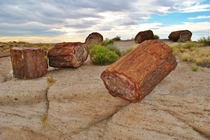 The petrified logs of Petrified Forest National Park