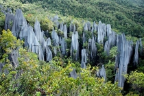 The Pinnacles Mulu National park  You dont know how hard it was to take this picture  OC