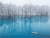 The Pond That Changes Color_ Biei In Hokkaido Japan By Kent Shiraishi