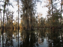 The quiet beauty of the Bayou Southern Louisiana