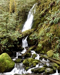 The Quinault Rainforest on Washingtons Olympic Peninsula is host to an abundance of waterfalls in the winter and spring