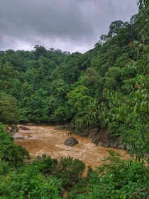 The rainforest after heavy storm western ghats India