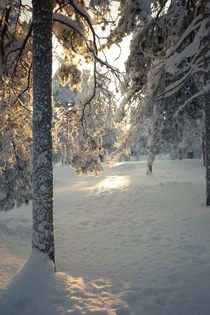 The rays of sunlight kiss a snow covered branch somewhere in northern Finland