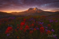 The Rebuilding - Mt St Helens Washington