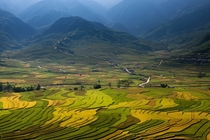 The rice paddies of Vietnam by Sarawut Intarob