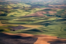 The rolling hills of the Palouse in Washington state