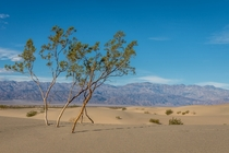 The Sand Dunes in Death Valley National Park CA