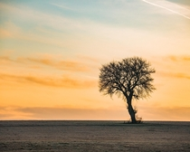 The simple things and their beauty in winter - a tree at sunrise in Northern Bavaria in Germany  - more of my landscape at insta glacionaut