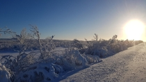 The snowy forest and newly returned sun The long dark time in northern Norway Finnmark is over Taken around noon today by the road towards Karasjok
