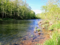 The sparkling clear waters of Little Pine Creek - Waterville PA