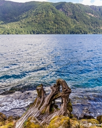 The sparkling water at Lake Crescent Olympic National Park showcasing the beauty that is the PNW