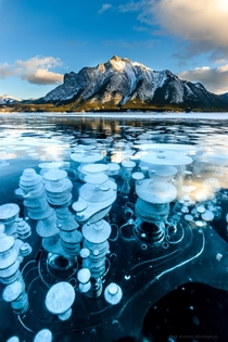 The spectacle of frozen methane bubbles at Abraham Lake Alberta Canada