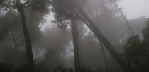 The spooky forest of Sintra Portugal