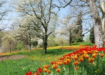 The Spring path at the island of Mainau Germany during the tulip blooming