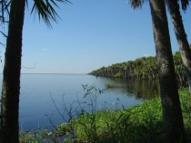 The Stick Marsh - head waters of the St Johns River Florida