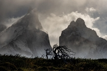 The strong winds in the Torres del Paine region force the trees to grow in twisted shapes  Instagram micomicky