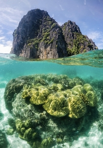 The stunning coral life below these turquoise waters - El Nido Palawan