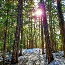 The sun peaking through the trees at Lost Lake in Whistler British Columbia
