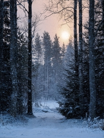 The sun sets in the snowy woods  Photographed by TRM