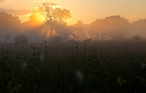 The sun shines through mist over the prairie at Middlefork Savanna Forest Preserve