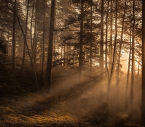 The sun shining through mist in a forest located in Sweden  Insta mdmperspective