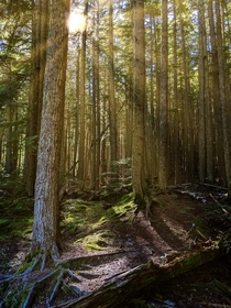 The sun shining through the forests of Glacier National Park
