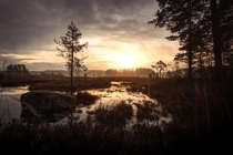 The sun slowly rising over a large wetland area located in Sweden