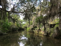 The swamp in Jean Lafitte National Preserve outside New Orleans Louisiana