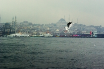The symbol of stanbul  Seagull