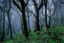 The temperate cloud forests on La Palma Canary Islands  by Jan Geerk