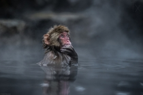 The Thinker Takeshi Marumoto photographed this snow monkey in Japan as it sat in a hot spring