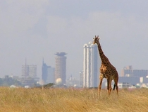 The Towers of Nairobi